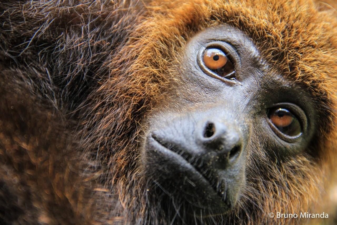 ארגון TiME ירכוש 2 שטחים בקניה ובברזיל שבהם מינים בסכנת הכחדה ויהפוך אותם לשמורות טבע