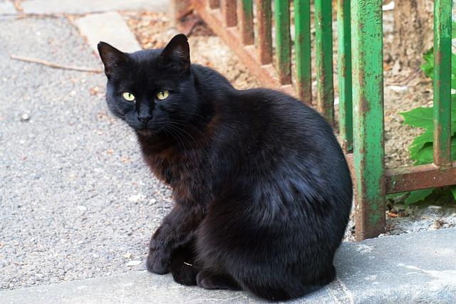 עיקור חתולי רחוב