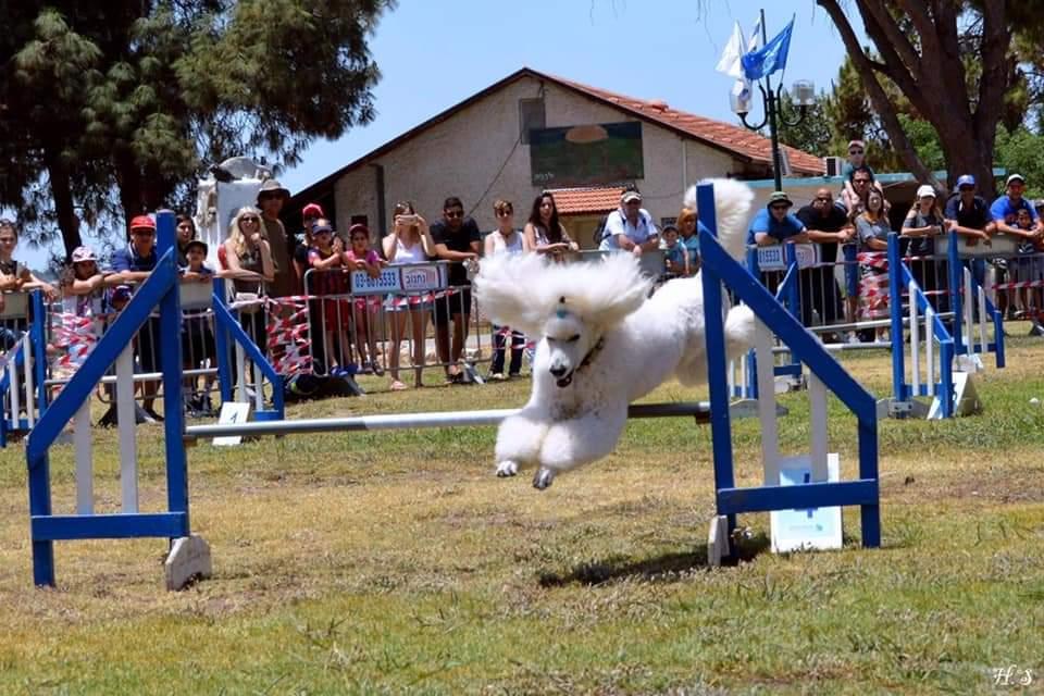 תערוכת הכלבים הבינלאומית 2021 צפויה להתקיים בנוף הגליל