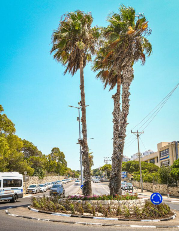 שתילה בחיפה